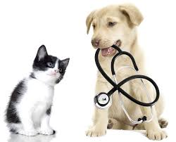 veterinary Practice valuaion